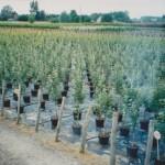Nasza firma zaopatrywała w rośliny większość powstających w Polsce supermarketów