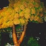 Polagra - w latach 1997-2004 nasze rośliny wielokrotnie zdobywały nagrody i medale.