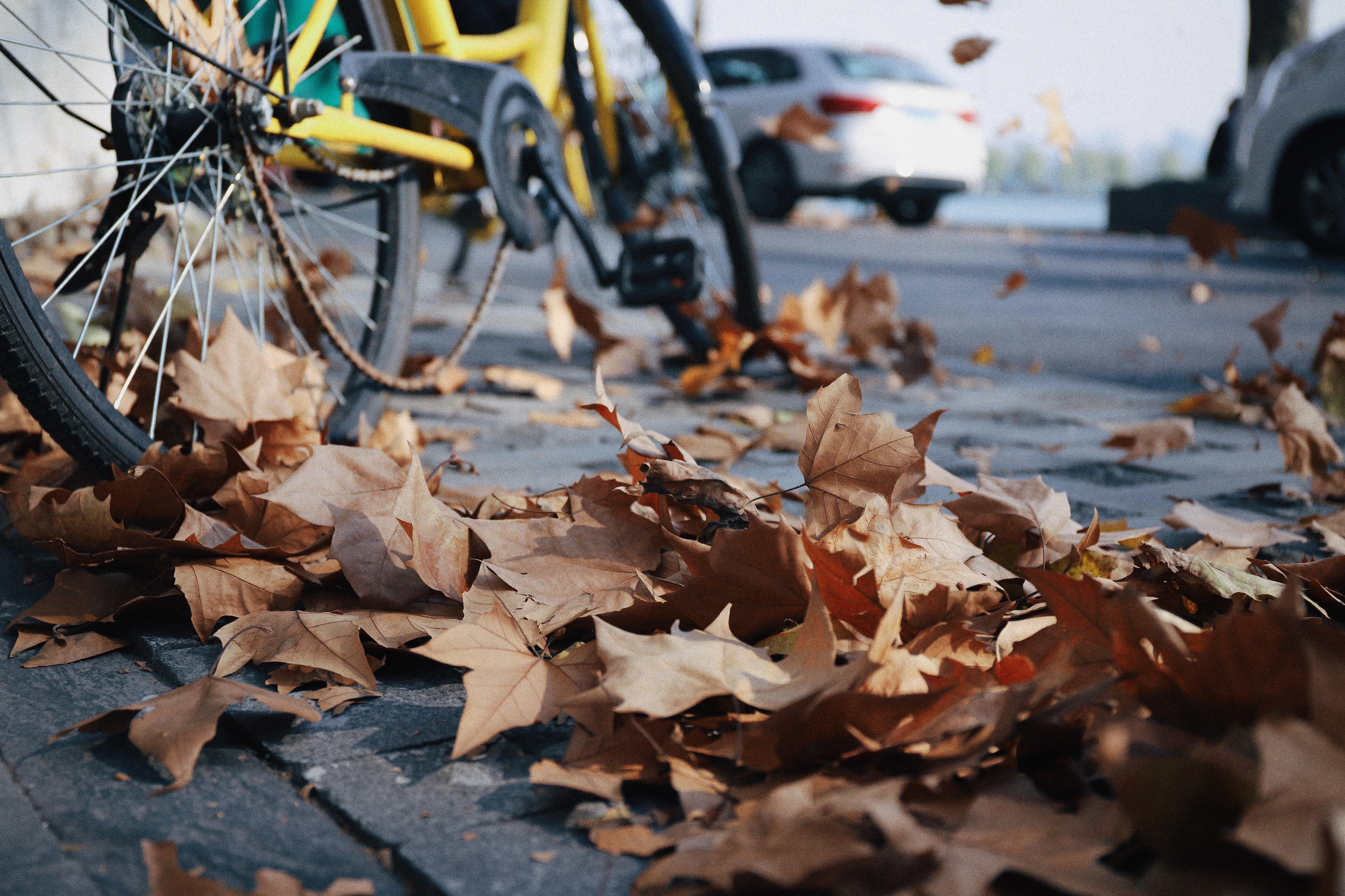 Wniosek o uporządkowanie terenu po wycinkach drzew wzdłuż ścieżki rowerowej do Kalinka